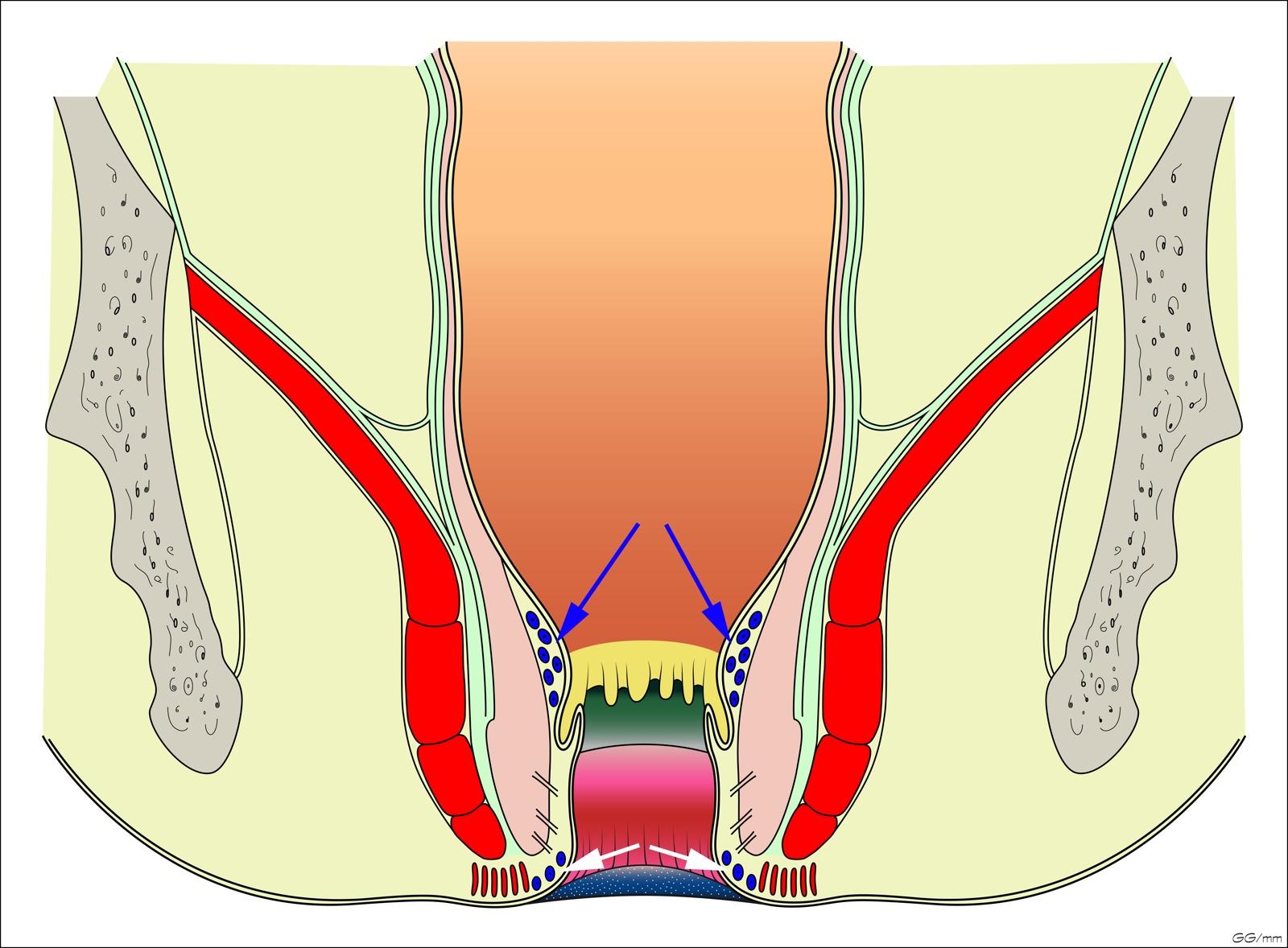 Dentate Line
