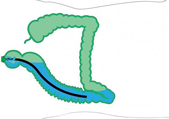 Fig. 6D